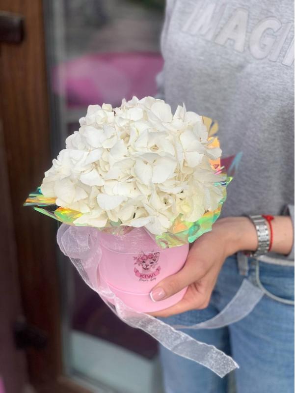 Комплімент з гортензією в коробці  | Квіти у коробці від Kiwi Flower Shop